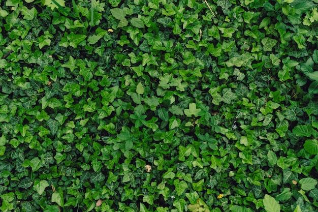 Sfondo naturale strutturato di molte foglie verdi