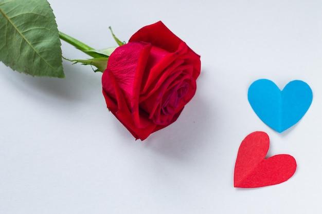 Sfondo per san valentino e l'8 marzo. rosa rossa e cuori