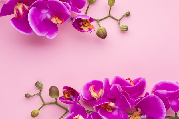Sfondo rosa spazio copia con fiori di orchidea