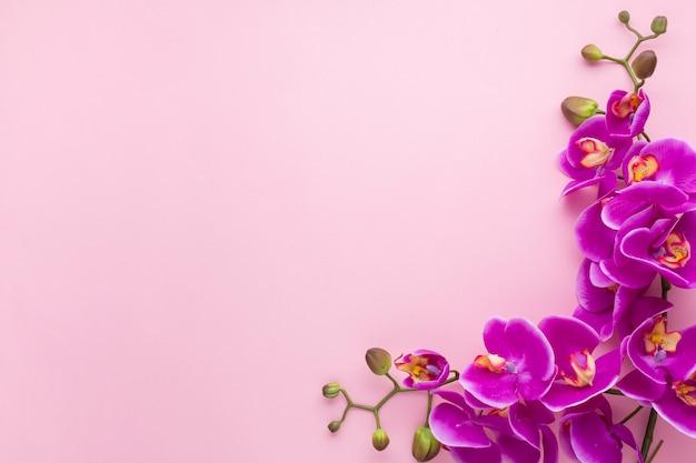 Sfondo rosa spazio copia con orchidee