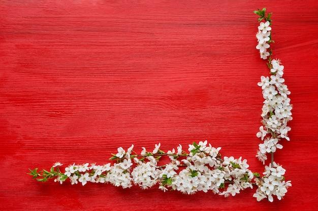 Sfondo rosso con ramo fiorito di primavera di susini. sfondo vacanza