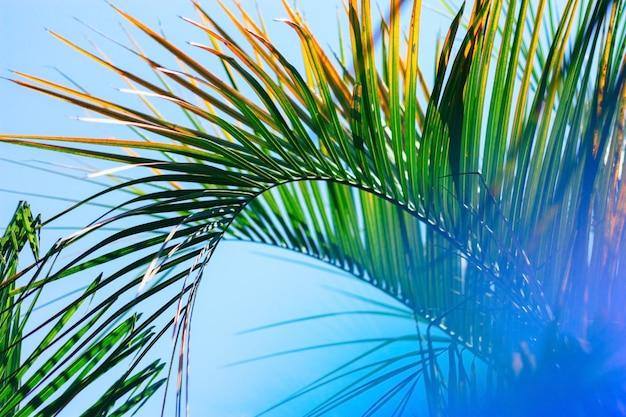 Sfondo sfocato con foglia di palma