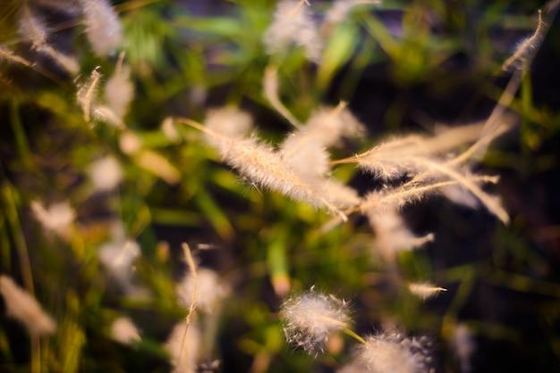 Sfondo sfocato di erba verde