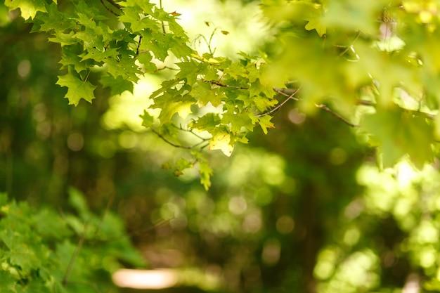 Sfondo sfocato naturale del percorso nella foresta di estate