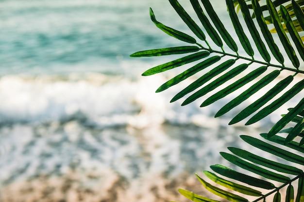 Sfondo spiaggia con foglia di palma