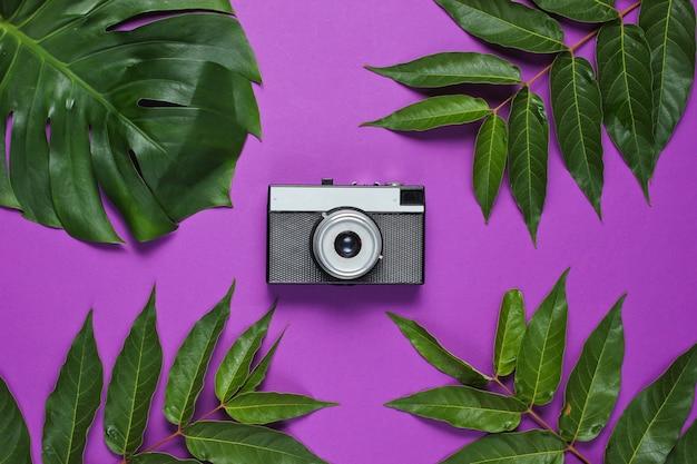 Sfondo stile retrò. fotocamera a pellicola tra foglie verdi tropicali su sfondo viola.