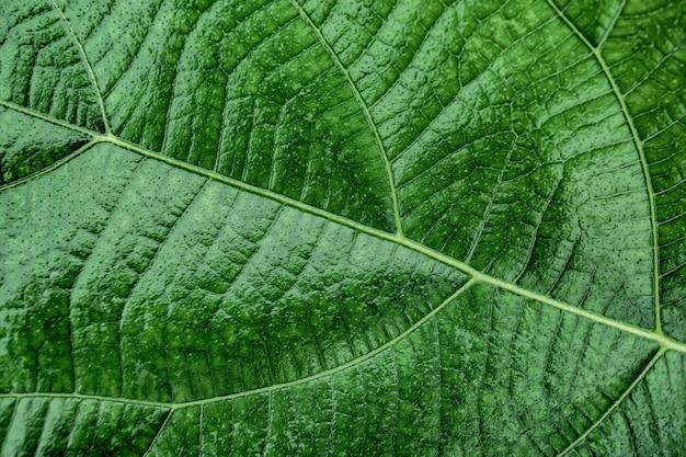 Sfondo texture foglia verde per il design