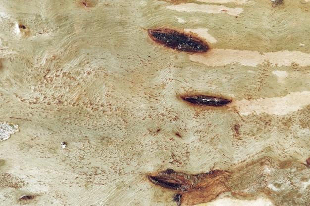 Sfondo texture legno naturale