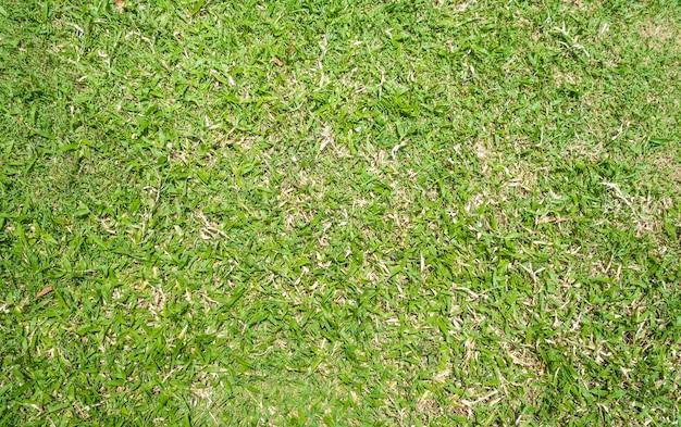 Sfondo trama di erba verde