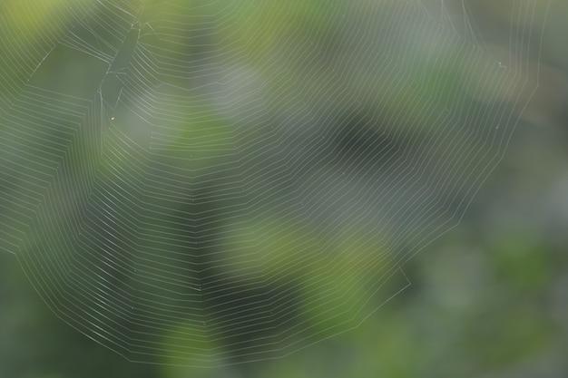 Sfondo trama di linee web