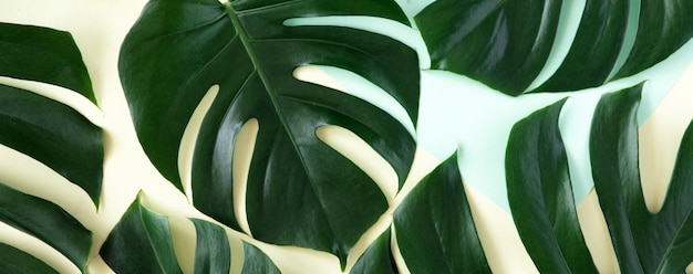 Sfondo tropicale. foglie di palma tropicali su fondo giallo e blu pastello.