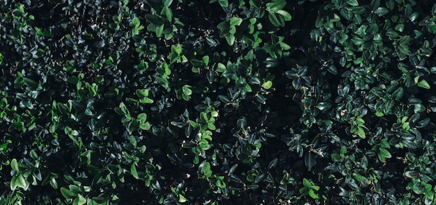 Sfondo tropicale naturale natura foresta giungla fogliame