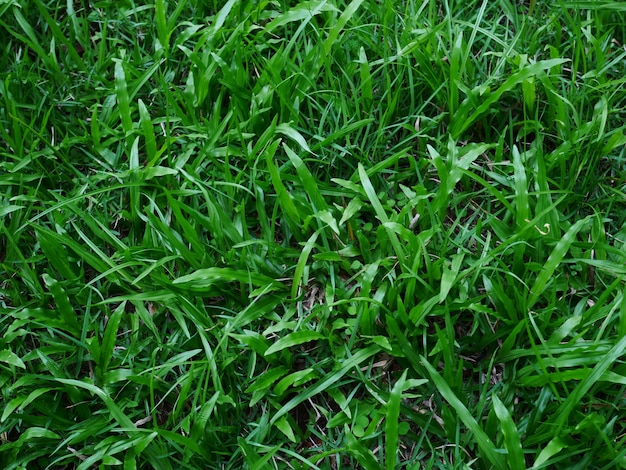 Sfondo verde erba, trama del cortile