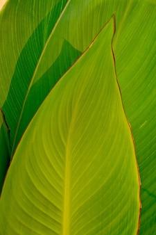 Sfondo verde foglia. le foglie
