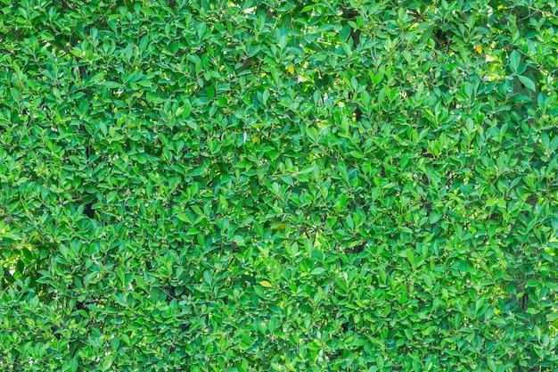 Sfondo verde foglia utilizzato per l'immissione di testo