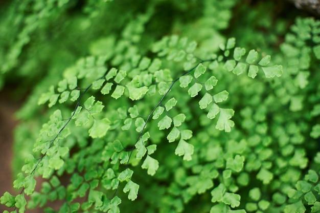 Sfondo verde fogliame, foglie di giungla tropicale