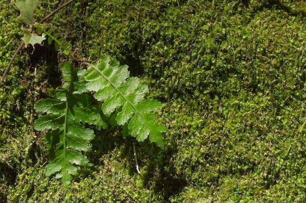 Sfondo verde natura e muschio