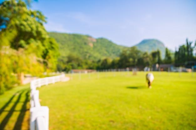 Sfuocatura astratta del parco con campo verde