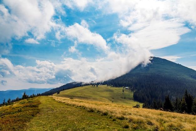 Si rannuvola la cima di una montagna con il prato verde dell'erba e della foresta