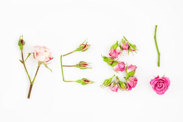Sì testo fatto con gambo e rose su fondo bianco
