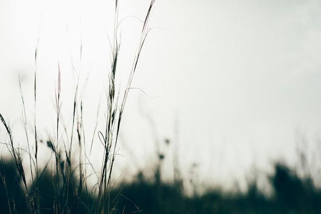Silhouette di erba