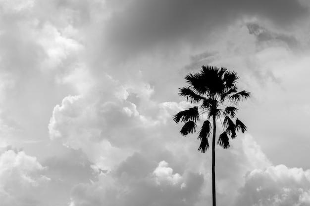 Silhouette di una palma