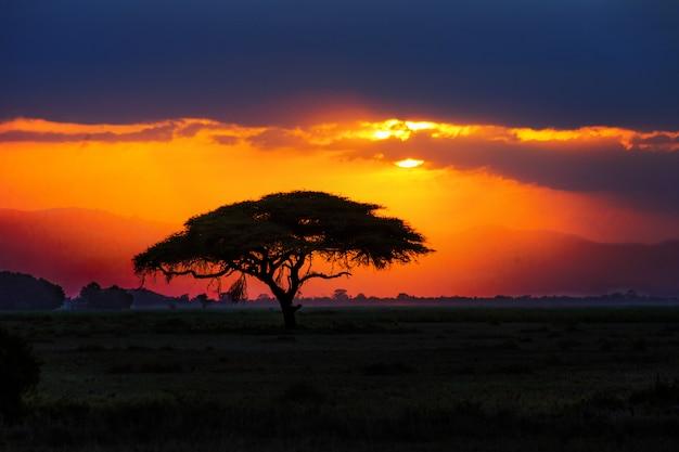 Siluetta africana dell'albero sul tramonto in savana, natura dell'africa, kenya