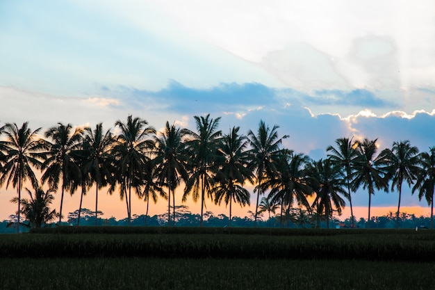 Siluetta dei cocchi sul tramonto variopinto di paradiso