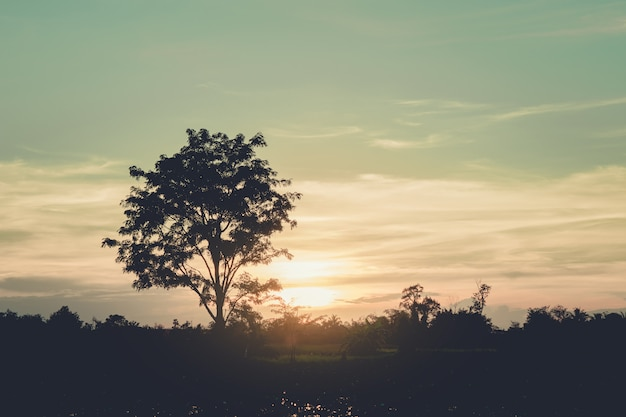 Siluetta dell'albero al tramonto, filtro d'annata.