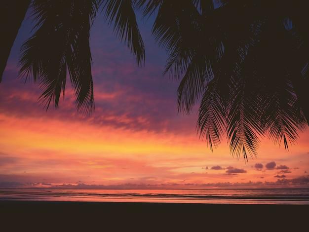 Siluetta della donna e della palma sulla spiaggia di tramonto