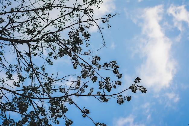 Siluetta della filiale di albero con la priorità bassa del cielo nuvoloso