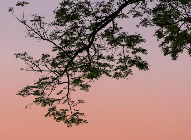 Siluetta della foglia sul fondo del cielo crepuscolare
