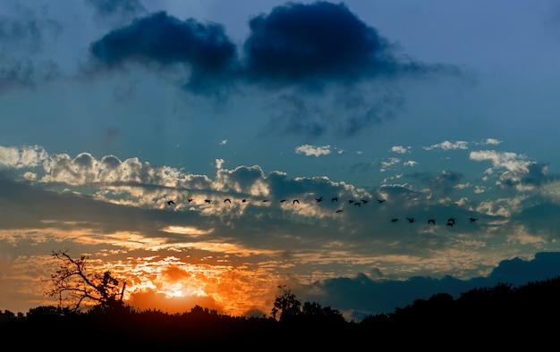 Siluetta delle oche che volano nel cielo durante l'effetto atmosferico dei raggi luminosi di tramonto