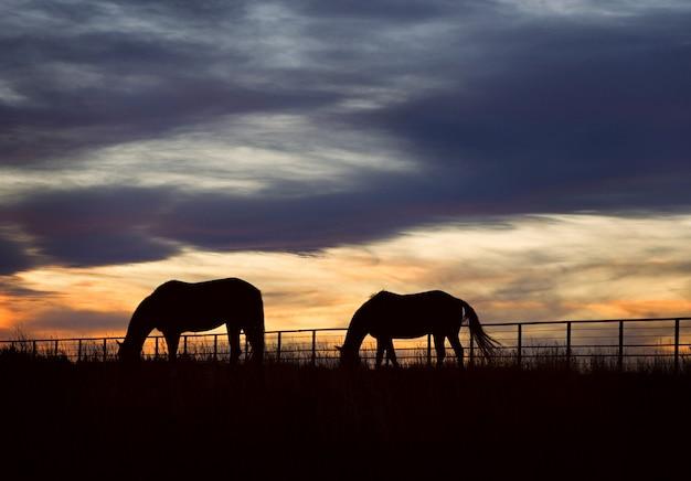 Siluetta di tramonto dei cavalli del ranch del colorado