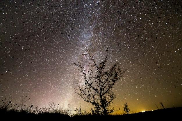 Siluetta scura di contrasto dell'albero sul cielo stellato scuro, galassia della via lattea