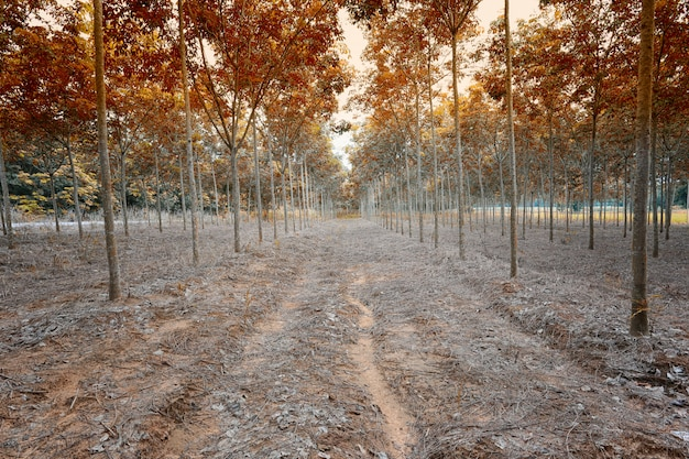 Silvicoltura serale in colori autunnali.