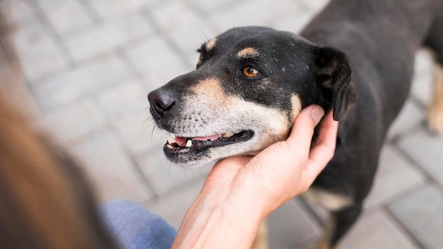 Simpatici cani da salvataggio essendo animali domestici al rifugio di adozione