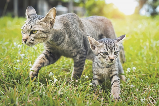 Simpatici gatti che camminano giocando sull'erba verde