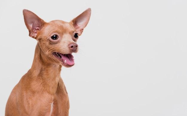 Simpatico cagnolino con copia spazio