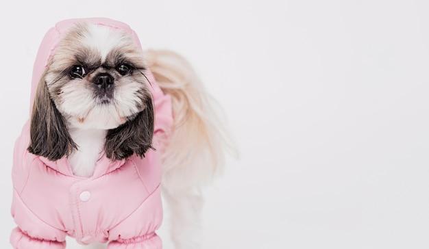 Simpatico cagnolino con costume