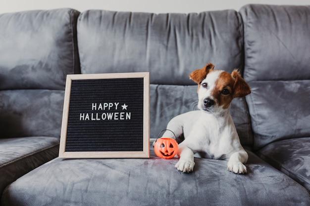 Simpatico cagnolino seduto sul divano di casa, con divertenti occhiali halloween arancioni. bordo della lettera felice del segno di halloween inoltre.