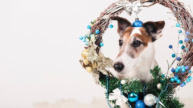 Simpatico cane con decorazioni natalizie