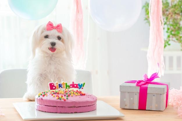 Simpatico cane con fiocco e torta di compleanno