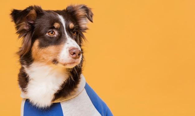 Simpatico cane con un costume
