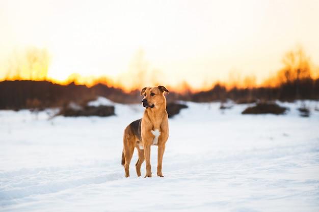 Simpatico cane di razza mista all'esterno. ibrido nella neve