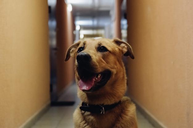 Simpatico cane di razza mista indoor. ibrido felice che si siede nel corridoio