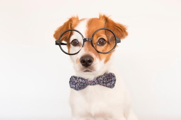 Simpatico cane intelligente con papillon e occhiali.