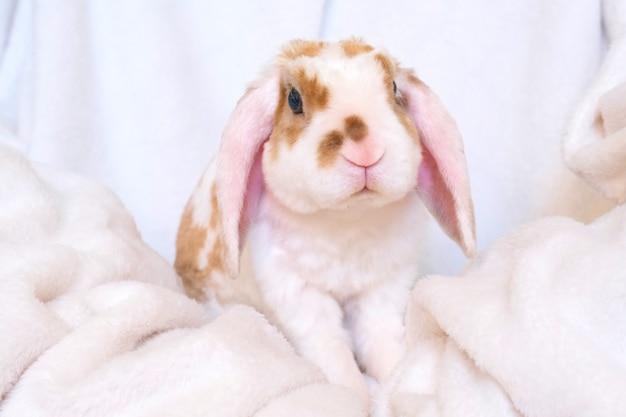 Simpatico coniglietto arancione e bianco con grandi orecchie