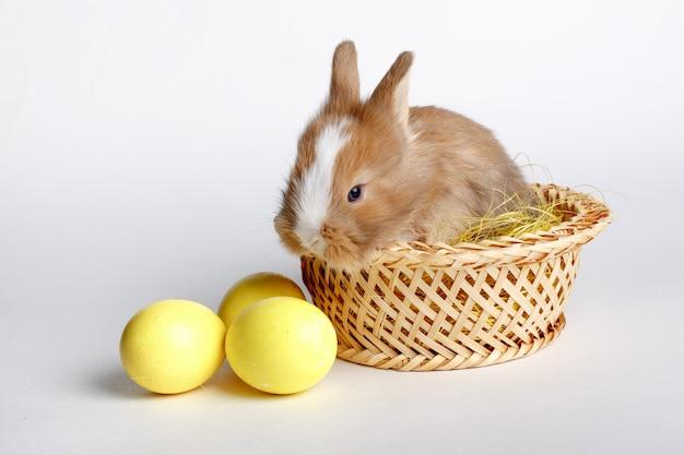 Simpatico coniglietto di pasqua seduto in un cestino con un uovo su uno spazio bianco