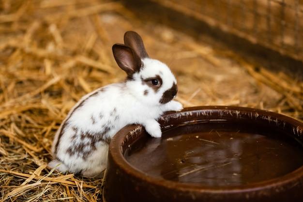 Simpatico coniglio bianco mangerà acqua dal vassoio sul pavimento di mattoni i